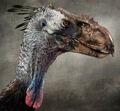 Daren-horley-bird