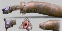 Precambrian Worm/Gallery