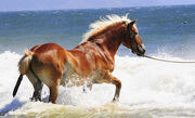 Horse ... nice day for a swim