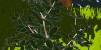 Plant Fibers