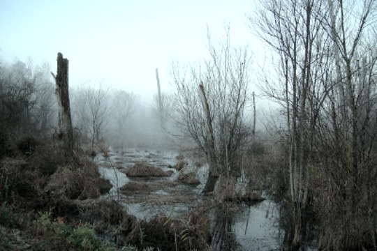 File:Misty-Bog.jpg