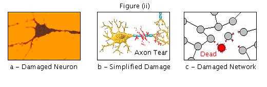 File:Brain repair figure ii.jpg