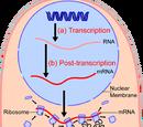 Protein biosynthesis