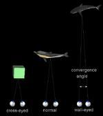 Stereogram Tut Eye Convergence