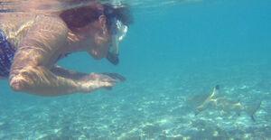Snorkeler with blacktip reef shark