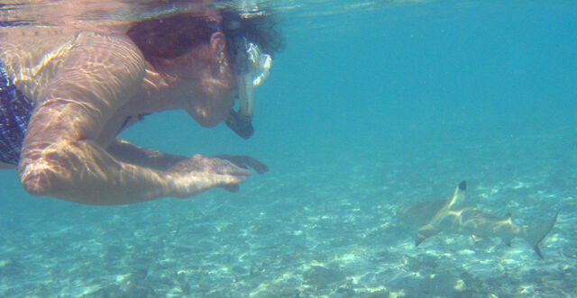 File:Snorkeler with blacktip reef shark.jpg