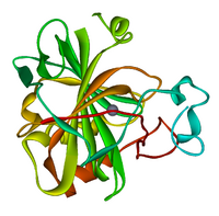 Carbonic anhydrase 1CA2