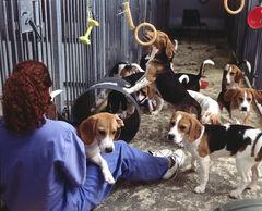 Dogs6CCcopy