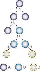Stem cells2
