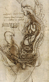 Coition of a Hemisected Man and Woman