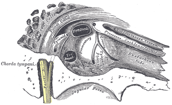 File:Gray 111 - Vertebral column.png