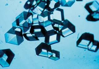 File:Insulincrystals.jpg