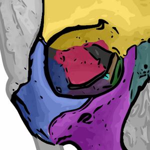 Orbital bones