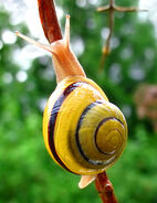 Snail-WA edit02