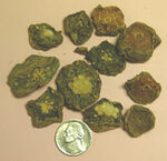 Peyote buttons seized by Arcata CA Police