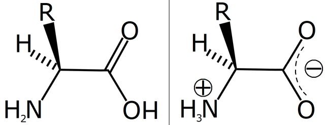 File:Amino acid zwitterion.png