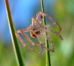 Spider-skin