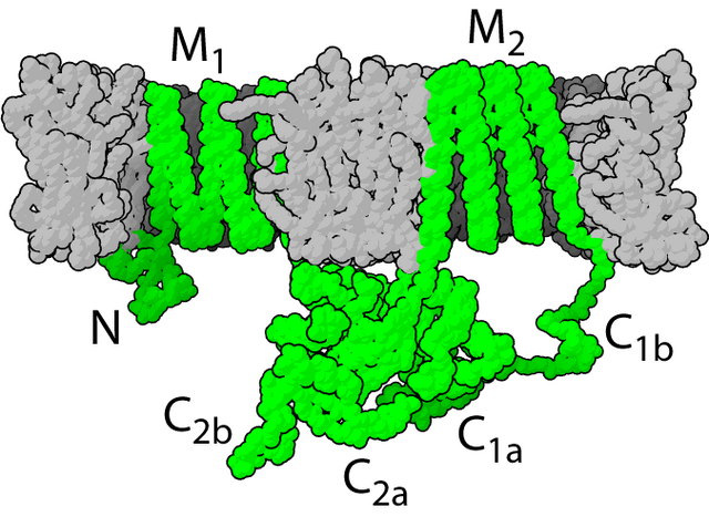 File:Adenylyl cyclase.png