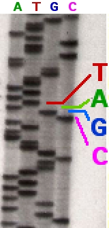 File:Sequencing.jpg
