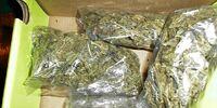 Illegal drug distribution