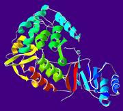 PhenylalanineHydroxylase-1PHZ