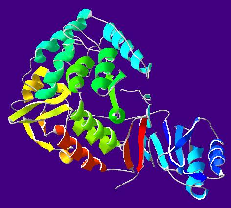 File:PhenylalanineHydroxylase-1PHZ.png