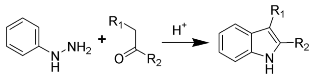 File:Fischer Indole Reaction Scheme.png