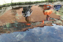Photo of two people reflected in a fish pond