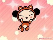 Pucca fox