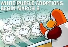 File:Whitepuffle15.jpg