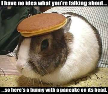 File:Rabbit With Pancake On The Head.jpg