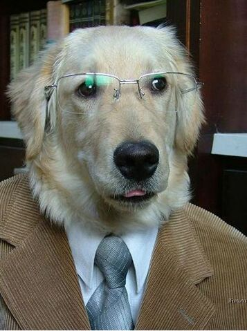 File:Professordog.jpg