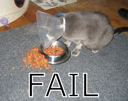 File:Failcat.jpg