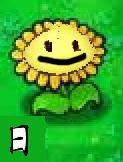Chinesesunflower