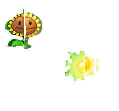File:Sunflowers and sunflowers' sun.png