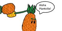 Pineapple-pult