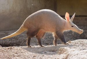 Aardvark workers