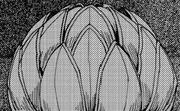 Supreme Fruit