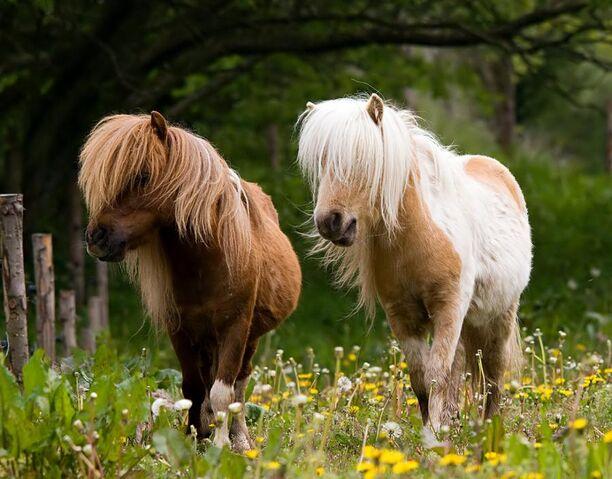 File:2 Ponies, Walking.jpg