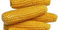 Corn Song