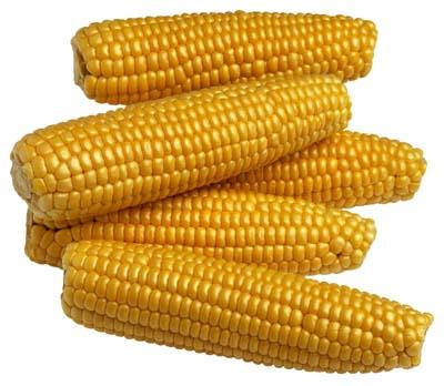 File:Corn-4.jpg