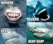 Derpy sharks