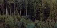 Uto Forest