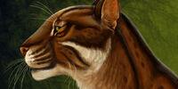 Dinaelurus crassus