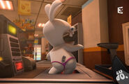 Les-lapins-cre-tins