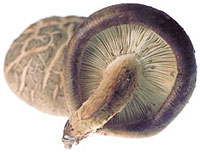 File:Irishmushroom.jpg
