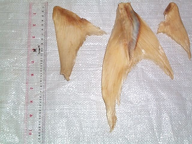 File:Shark'sFin.JPG