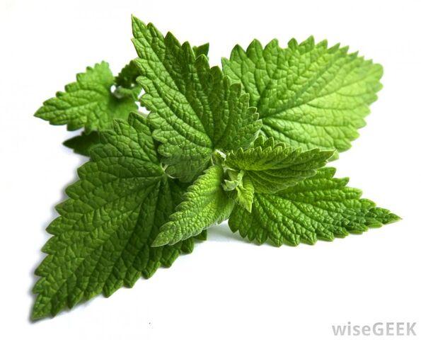 File:Fresh-mint-aphrodisiacs-lovecourses.jpg