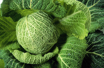 File:Cabbages.jpg
