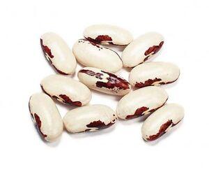 European soldier bean